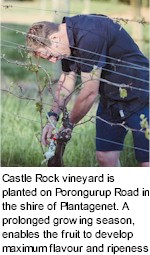 More About Castle Rock Winery