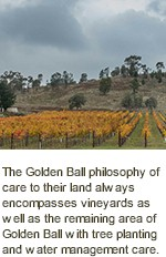 More About Golden Ball Winery