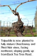 More About Tolpuddle Winery