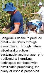 About Sanguine Winery
