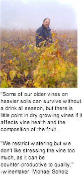 About Willows Wines